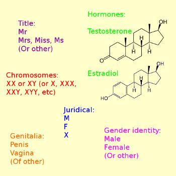 Sex: title, hormones, chromosomes, juridical, genitalia, gender identity.