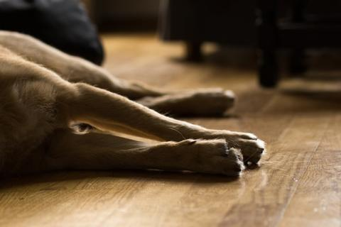 Dog [photo: dife88]