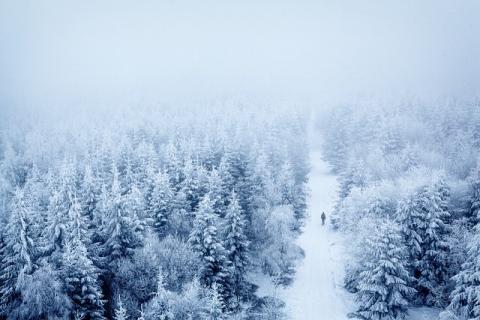 Bomen in mistige sneeuw [door Waldrebell]
