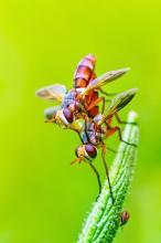 Fly [photo: robinbabu]
